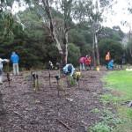Newells Community planting