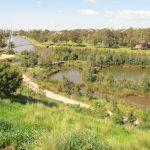 Afton Street Conservation Park Wetlands